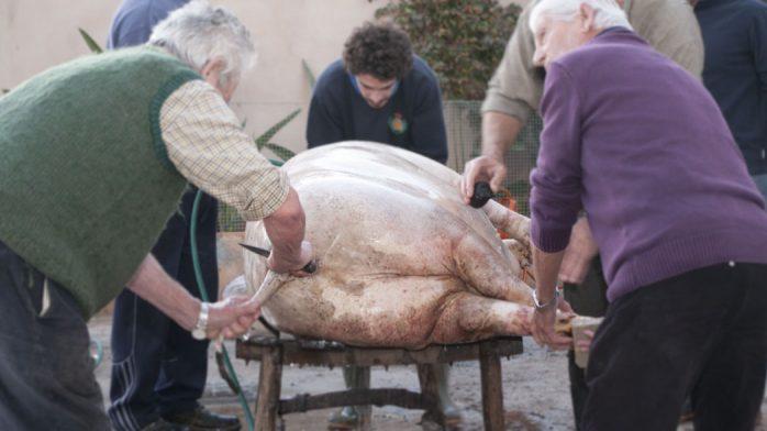 Matanzas mallorquinas limpiando cerdo