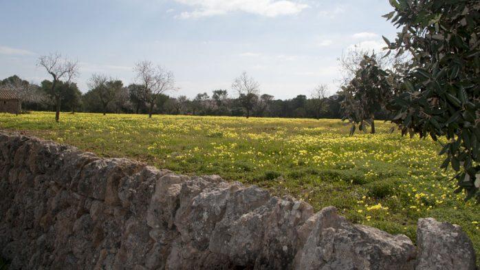 Parque natural Mondragó